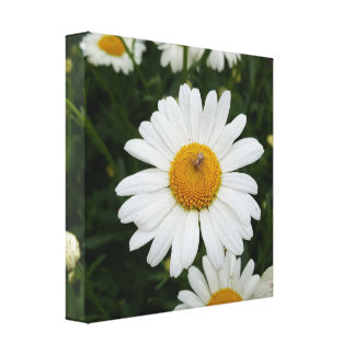 Spider on Daisy Canvas Print