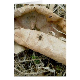 Spider on Dried Leaf Note Card