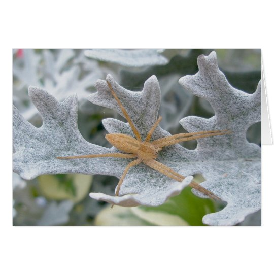 Spider on Dusty Miller Note Card