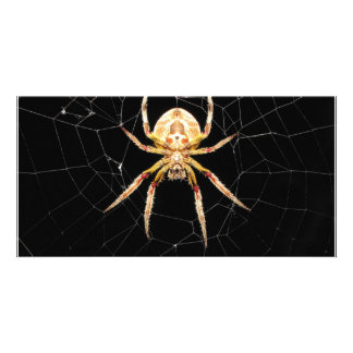Spider On Web Customized Photo Card