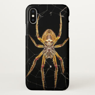 Spider on Web iphone Cover Photo Art