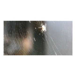 spider on web photo card