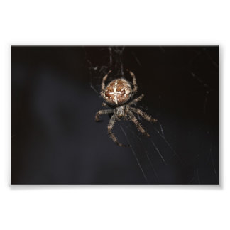 Spider Art Photo