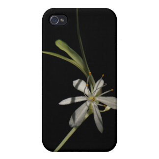 Spider Plant Flower ~ case iPhone 4/4S Cases