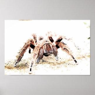Spider Poster