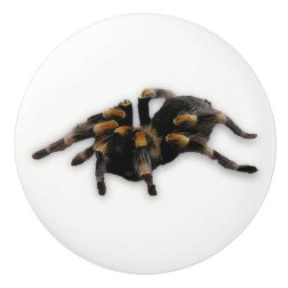 spider pull