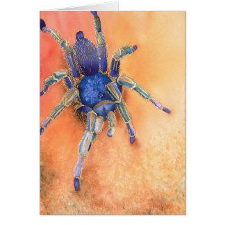 Spider - Tarantula Card