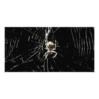 Spider Web at Midnight Picture Card