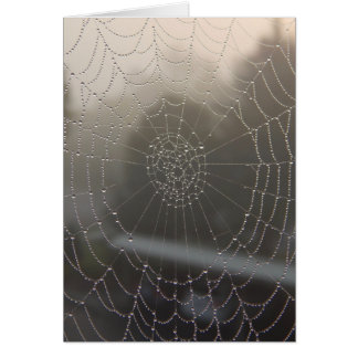 Spider Web With Morning Dew Card