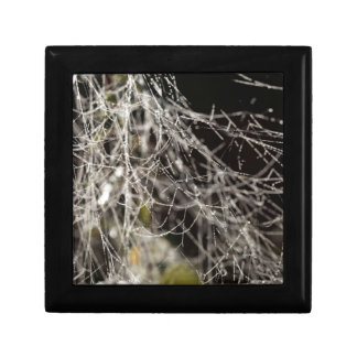 Spider webs with dew drops gift box