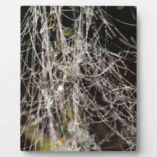 Spider webs with dew drops plaque