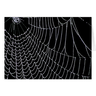 Spider's Web | Greeting Cards