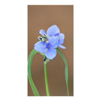 Spiderwort Blossom Photo Card Template