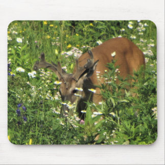 Spike Buck Browsing the Spring Gardens Mouse Pad