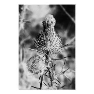 Spiked Thistle Poster