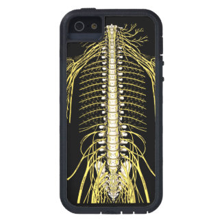 Spinal Nerves Anatomy Image Chiropractic iPhone 5 Case