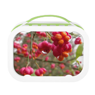 Spindle Fruit And Rain Drops Lunchboxes