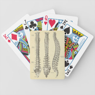 Spine Anatomy Playing Cards