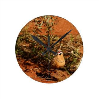 Spinifex Pigeon Round Clocks