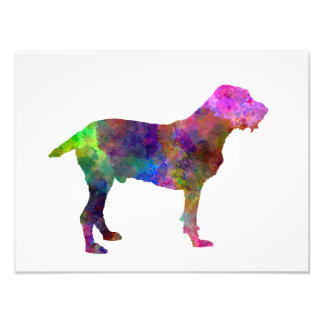 Spinone in watercolor photographic print
