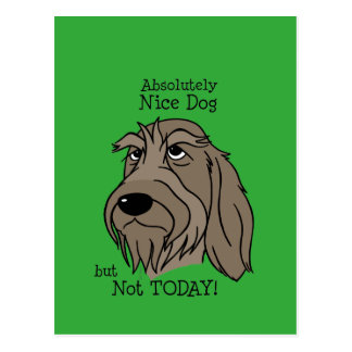Spinone Nice dog Postcard