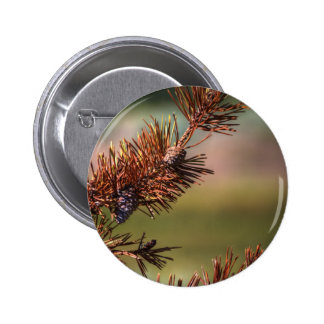 Spiny Cones Pin