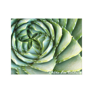 Spiral Aloe photo by Debra Lee Baldwin Canvas Print