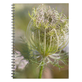Spiral note pad savage carrot notebook
