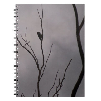 Spiral Notebook, a lonely woodpecker on branch Notebook