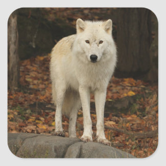 Spirit of the forest square stickers