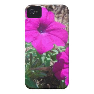 Splash of purple iPhone 4 covers