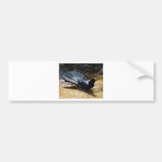 Splashing Crow Bumper Sticker