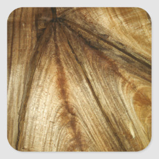 Split Maple wood Square Sticker