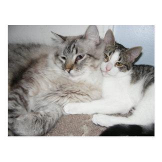 Spoiled kitties in love Card