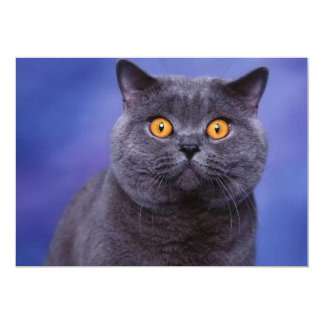Spooky Kitty Wide Eyed 13 Cm X 18 Cm Invitation Card