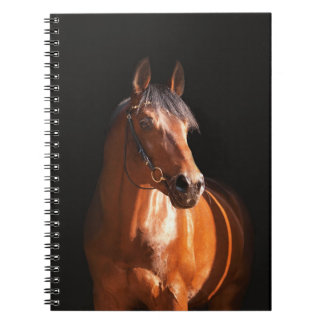 sportive horse at black spiral notebooks