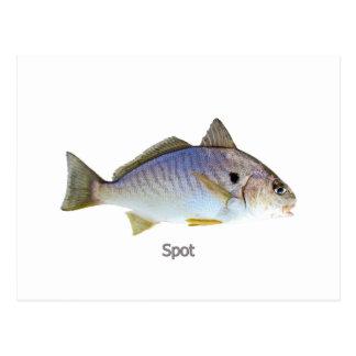 Spot Fish Photo Postcard