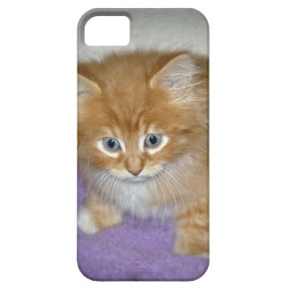 Spot on this kitten case for the iPhone 5