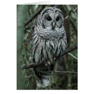 Spot, the owl card