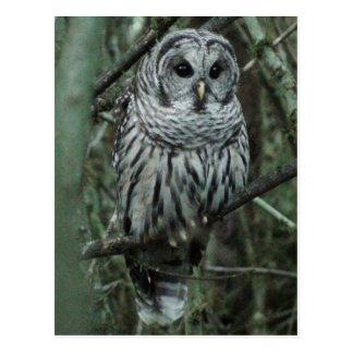Spot the Owl Postcard 02