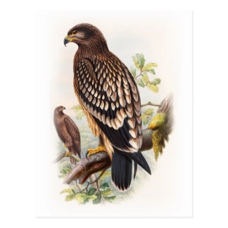 Spotted Eagle John Gould Birds of Great Britain Postcard