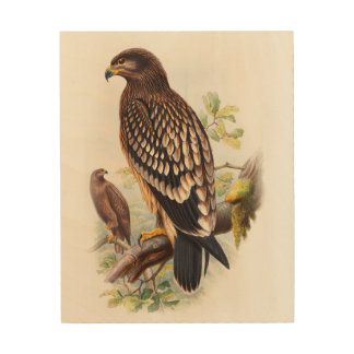 Spotted Eagle John Gould Birds of Great Britain Wood Canvases