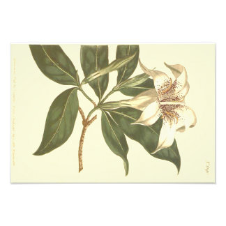 Spotted Flowered Gardenia Illustration Photo Art