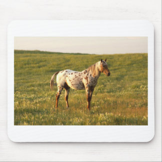 Spotted Horse Stallion Mouse Pad