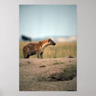 Spotted Hyaena Poster