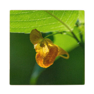 Spotted Jewelweed Yellow Wildflower Wood Coaster