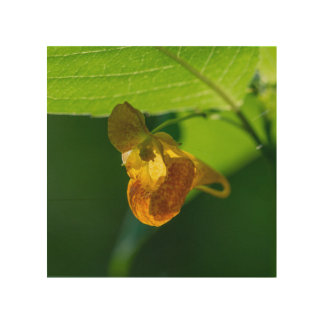Spotted Jewelweed Yellow Wildflower Wood Wall Art Wood Prints