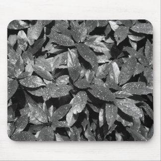 Spotted Laurel, Aucuba Japonica - B/W Mouse Pad