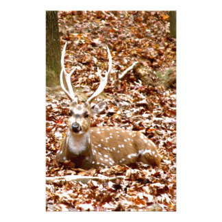 Spotted Male Buck Deer With Antlers in Fall Forest Stationery Design
