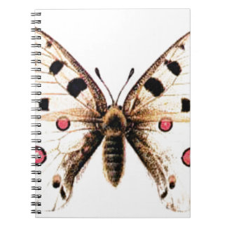 Spotted moth notebooks